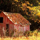 Little Red Shed.