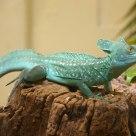 Beware! Green Reptile!