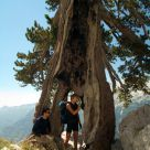 Tenacious tree