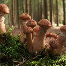 mushroom family II