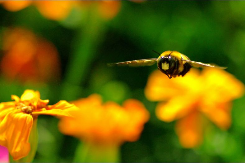 Airborne BEE