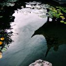 Reflections in the Chinese Garden
