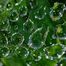 Droplets in Web