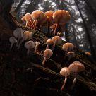 mushroom family III