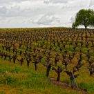 Russian River Winery