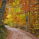 Way to the autumn