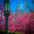 Spring at Temple Square, SLC Ut