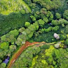 Kaua'i Greenery from the Air
