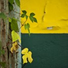 Green-yellow