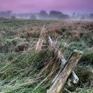 Dawn of the Bialowieza meadows