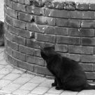 Street Cats