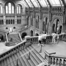 Natural History Museum Gallery