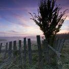 Dawn of the Bialowieza meadows