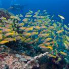 Diving in Malaysia - Mabul & Sipadan