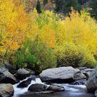 Sierra Colors In Autumn
