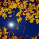 Otoño (Autumn)