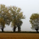 Autumn in Pavia's Countryside