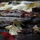 Wet Riverbank
