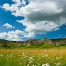Badlands in bloom