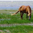 a horse on the beach of Huren Lake