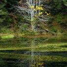 Fading Yellow Glory