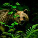 encounter with a bear