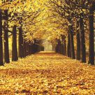 Autunno