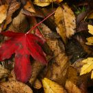 A Red and Golden Fall