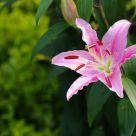 Pentax Pink