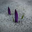 early spring...
