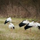 Le sitting des cigognes - The sitting of storks