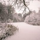 bosque bajo la nieve