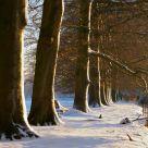 Dutch snow