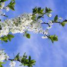 Feeling of spring