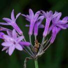 Mantis & Flower