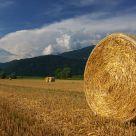 Hay Wheels