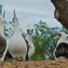 Leysan Albatross Mating Rituals