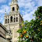 La Giralda y los naranjos /  The Giralda and the oranges