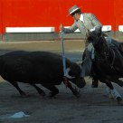 Mounted Bullfighter