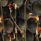 Wales crabing