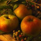 Three Large Bramleys