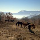 Horses at wake