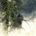 baboon climbs a tree