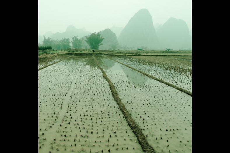 Yulong Fields