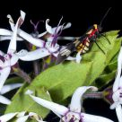 Insect, Flowers and Colors