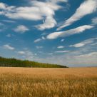 Clouds  over  wheat  field