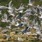 Gull Panic!...
