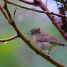 Birding in the Rain