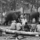 Elephant Men (2011)