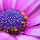 Flower@Macro